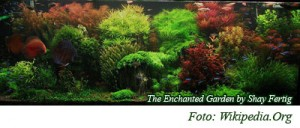 Aquascape gaya Belanda